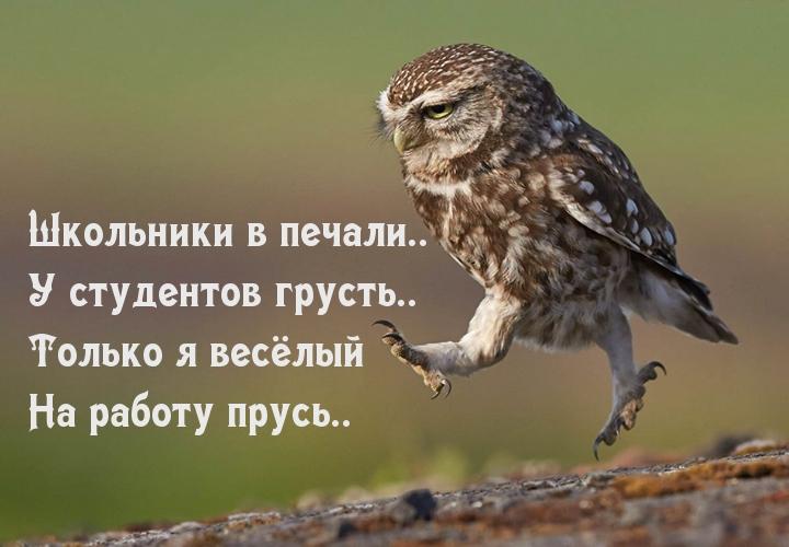 """Картинки с надписями """"Прикольные"""" (2397 шт.)"""