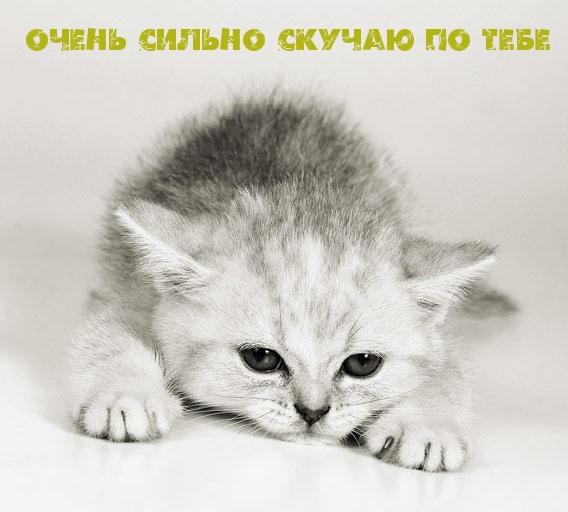 Картинки с надписями. Очень скучаю по ...: www.imagetext.ru/inscription-2498.php