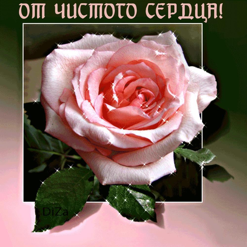 Розы открытки с надписями