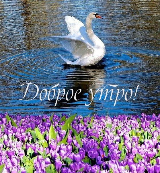http://www.imagetext.ru/pics_max/images_13225.jpg