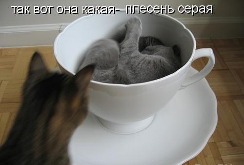 фото кошки приколы с надписями: