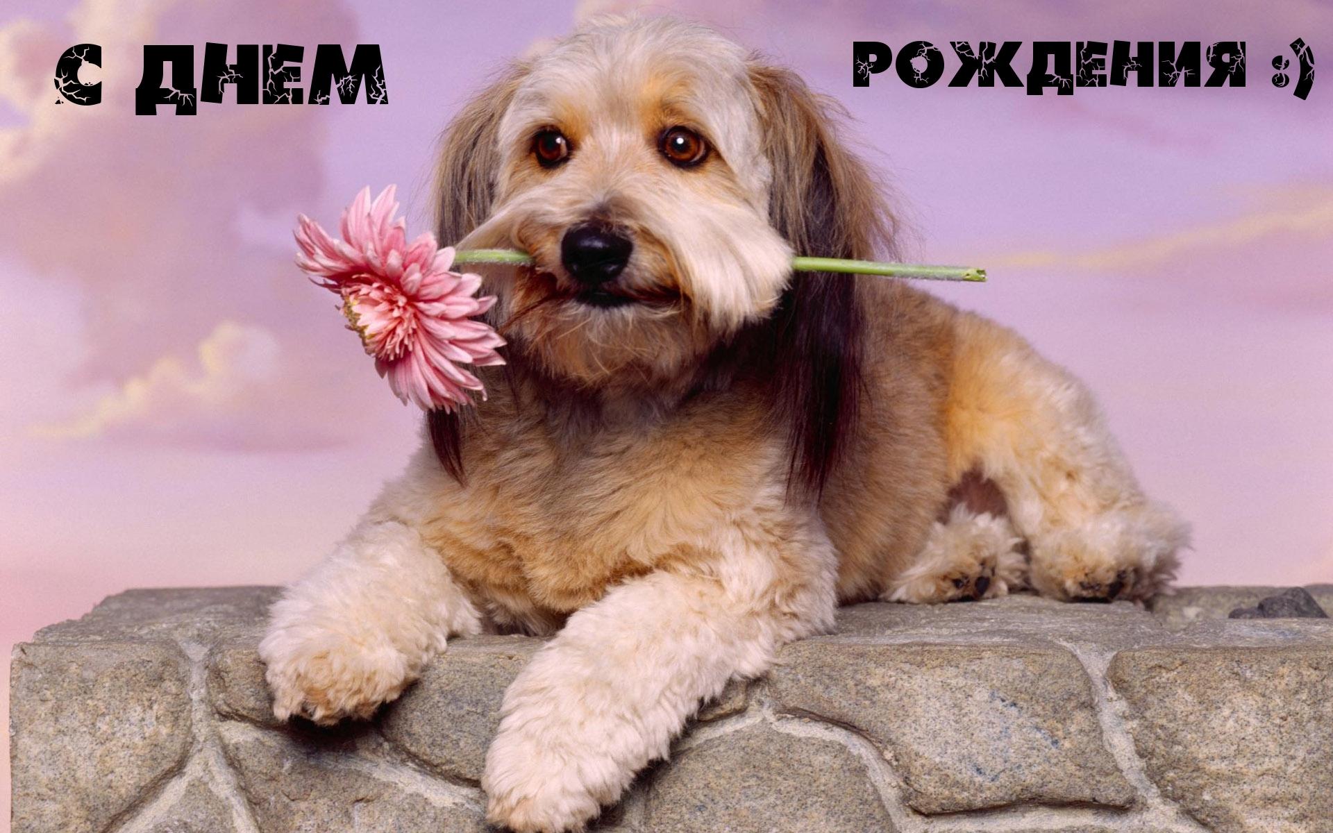 Картинки с надписями. С днем рождения!.: www.imagetext.ru/inscription-2254.php