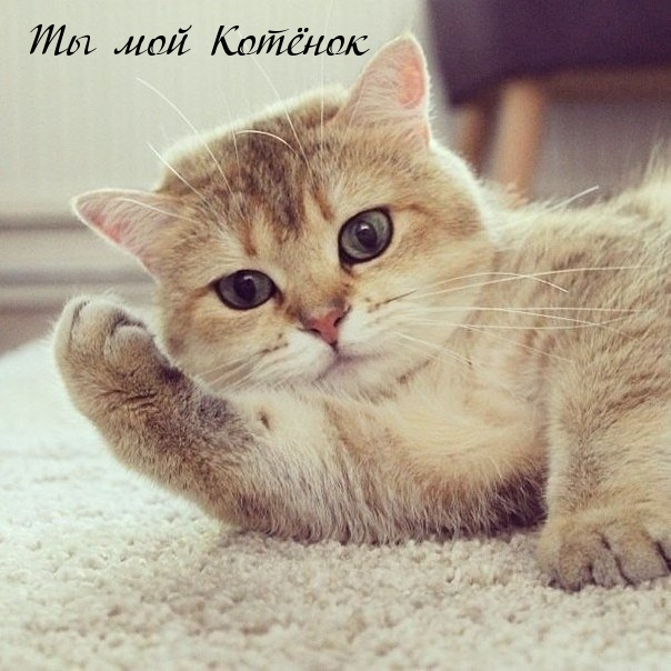 Картинки мой котенок