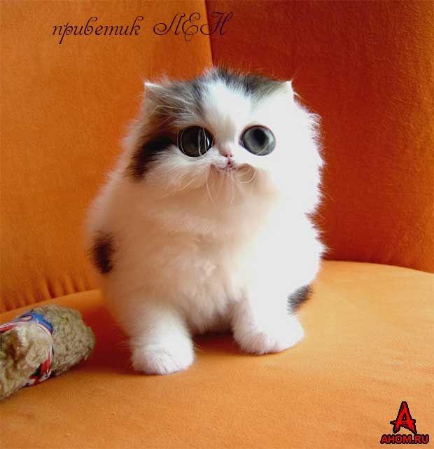 Картинки с надписями. приветик, Лена.: www.imagetext.ru/inscription-6234.php