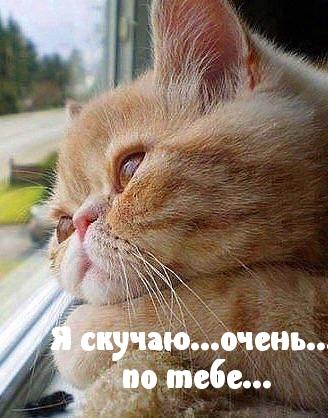 Картинки: Скучаю по тебе!