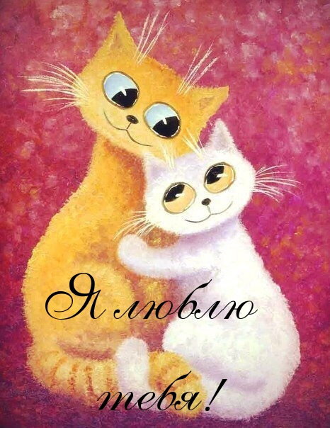 Котик я тебя люблю открытка 88